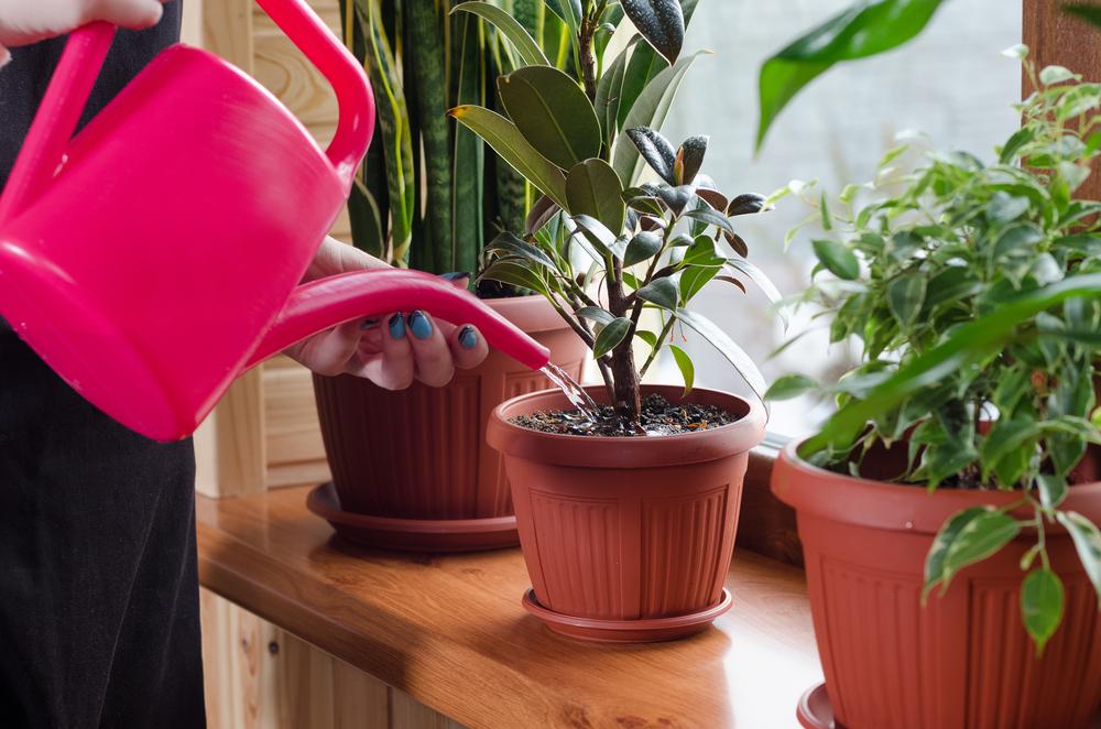 風水で観葉植物が大切な意味がある理由・運気を変える置き方について