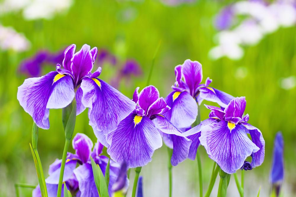 花言葉で希望をプレゼントしよう!大切な人を前向きにしてくれる花の種類