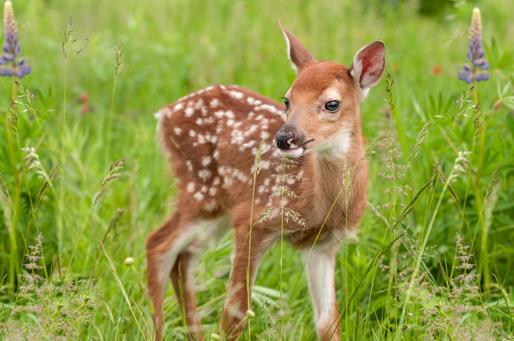 動物占いでわかる相性・いい動物と悪い動物の違いについて