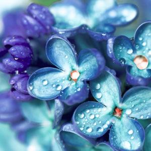 花が嫌いな人が好きになる素敵な花言葉・心が花を求めるようになる習慣について