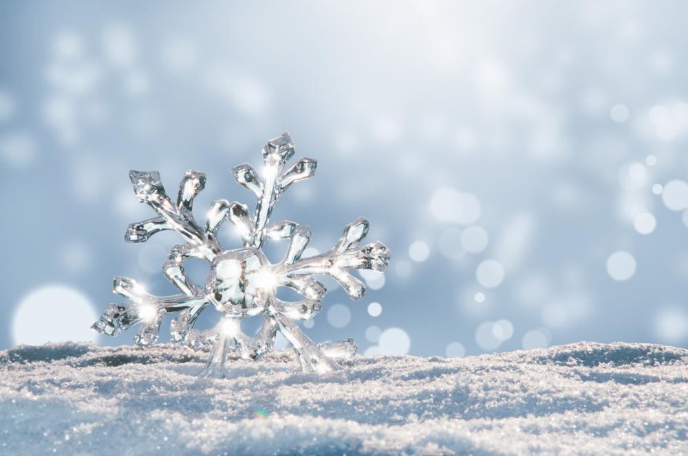 1月の誕生日は花言葉をプレゼントしよう!人気の種類とオススメを徹底解説
