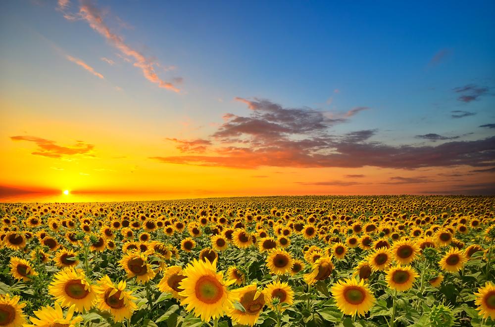 努力している人を応援する素敵な花言葉・優しいエネルギーをプレゼントしよう!
