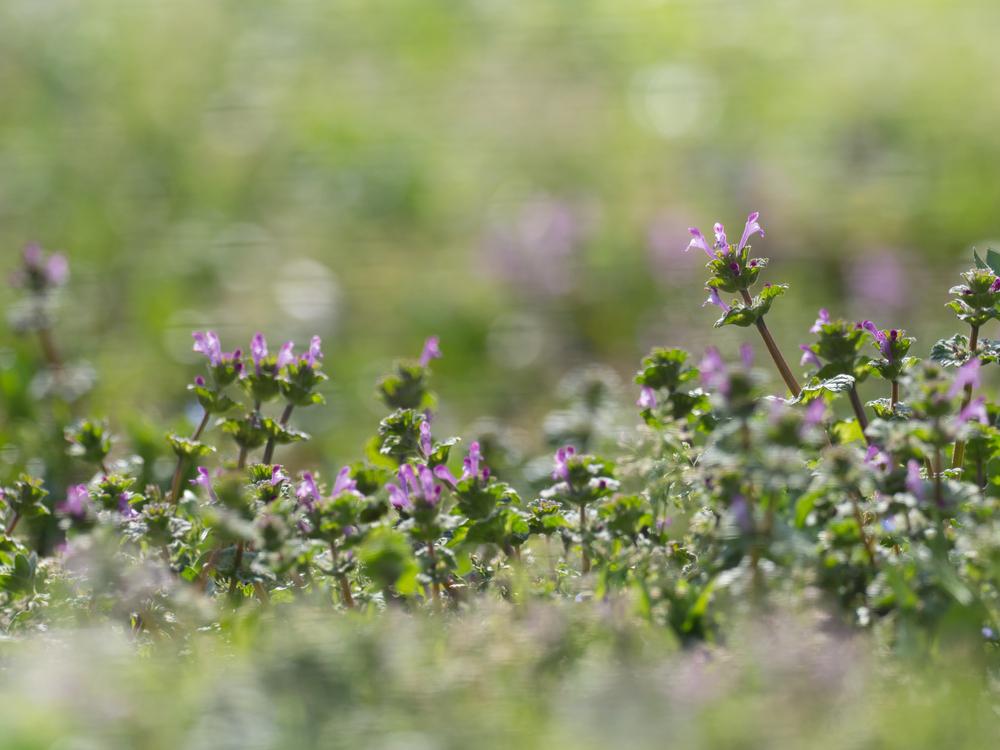 雑草にも花言葉があるの?力強く育つ道端の植物が持つ意味について