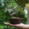 盆栽選びは花言葉で考えてみよう!贈り物やインテリアにオススメの素敵な花言葉