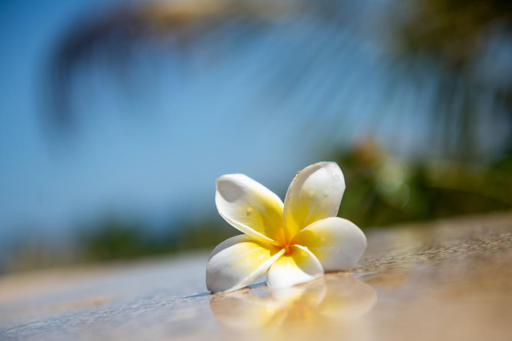 フローラル系のアロマで使う香りのよい素敵な花言葉!